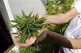 Medical Marijuana License RI