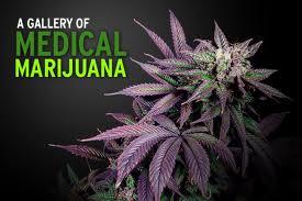 Medical marijuana program RI