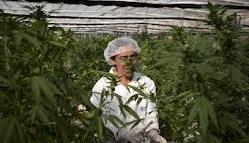 How to get medical marijuana in Rhode Island